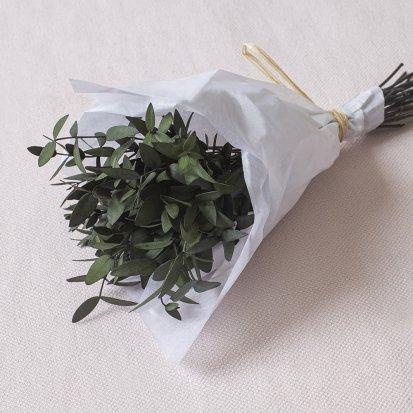 Parvifolia